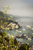 California  Big Sur  View of Pacific Ocean Coastline with Cow Parsley