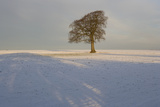 Winter Tree  Gloucestershire  England  UK
