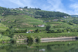 Europe  Portugal  Penajoia Vineyards  Douro River Valley  Douro River
