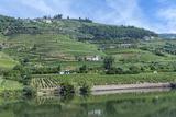 Europe  Portugal  Penajoia Vineyards  Douro River Valley  Douro River