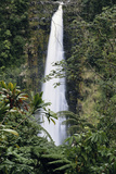 Hawaii Islands  Honolulu  1100 Alakea St  View of Beautiful Waterfall