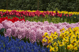 A Riotous Color of Varied Bunches of Flowers Growing Together