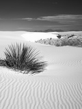 USA  New Mexico  White Sands National Monument Bush in Desert Sand