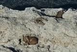 Puma Cubs  Torres del Paine NP  Patagonia  Magellanic Region  Chile