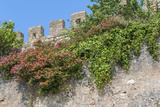 Europe  Portugal  Obidos  Flowering Plant and Vine on Battlement Wall