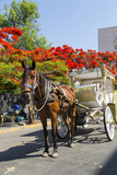 Horse and Carriage  Guadalajara  Jalisco  Mexico