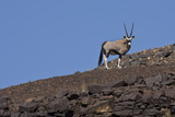 Kunene  Namibia Oryx Stands on a Rocky Ridge