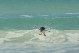 Falkland Islands  East Falkland Gentoo Penguin Leaping in Surf