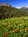 Colorado  Maroon Bells-Snowmass Wilderness Wildflowers in Meadow