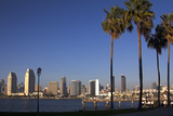 USA  California  San Diego San Diego Skyline and Palm Trees