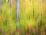 Michigan  Upper Peninsula a Panned Motion Blur of Autumn Woodland