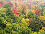 Michigan  Upper Peninsula Colorful Autumn Tree Scenic