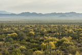 USA  Arizona  Saguaro National Park Desert Landscape