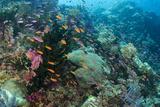 Coral Reef Diversity  Fiji