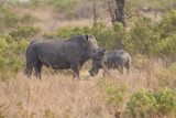 South Londolozi Private Game Reserve Rhinoceros Mother and Offspring
