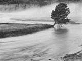 USA  Wyoming  Yellowstone  Firehole River and Tree
