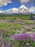 Washington State  Gifford Pinchot NF Mount Saint Helens Landscape