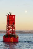 Washington, California Sea Lions and Cormorants. Full Moon Papier Photo par Trish Drury