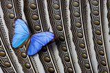 Butterfly  Blue Morpho  on Feather Argus Pheasant Wing Design