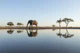 Botswana  Chobe NP  African Elephant at Water Hole in Savuti Marsh