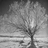 USA  Wyoming  Grand Teton National Park  Ice Tree
