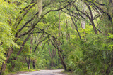 USA  South Carolina  Edisto Beach State Park Oak Trees Line Road