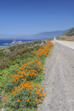 USA  California  Near Big Sur  California Poppies  Along Highway 1