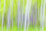 USA  Washington State  Yakima River Trail Abstract of Aspen Trees