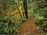 USA  Oregon  Silver Falls State Park Scenic Park Trail