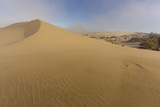 Sand Dunes and Pacific Ocean in the Oregon Dunes NRA  Oregon