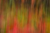 Washington  Walla Walla Whitman Mission Smooth Sumac in Fall Colors