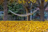 Hammock Looking Inviting in a Leaf Strewn Yard in Whitefish  Montana