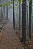 Trail in Fog  Yellow Mountains a UNESCO World Heritage Site