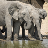 Namibia  Etosha National Park Elephants Drinking at Waterhole