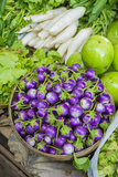 Myanmar Bagan Nyaung U Market Eggplant for Sale in the Market