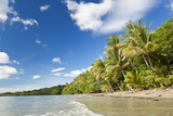 Beach  Cape Tribulation  Daintree National Park  Queensland  Australia