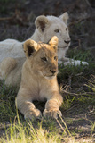 South Africa  East London Inkwenkwezi Game Reserve Lion Cubs