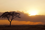 Kenya  Amboseli National Park  Lonely Tree at Sunset