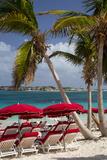 Umbrellas Along Orient Beach  Saint Martin  West Indies