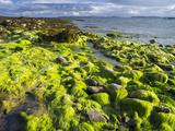 Isle of Lewis  Coast at the Eye Peninsula Scotland in July