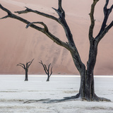 Namibia  Namib-Naukluft Park  Dead Vlei Three Dead Trees at Sunrise