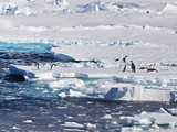 Antarctica Emperor and Adelie Penguins on the Edge of an Ice Shelf