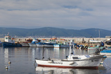Bulgaria  Black Sea Coast  Nesebar  Fishing Boats  Port