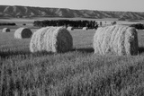 Canada  Manitoba  Rolled Hay Bales in Field