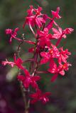 Indonesia  Bali Eka Karya Botanic Garden  Close Up of a Flower