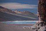 Llamas Grazing by the Tara Salt Lake  Atacama Desert  Bolivian Border