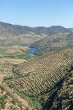 Portugal  Figueira de Castelo Rodrigo  View of Douro River Valley