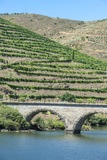 Portugal  Peredos Dos  Bridge and Vineyards Along Douro River