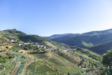 Portugal  Douro River Valley  Terraced Vineyards