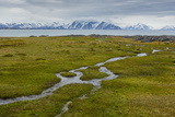 Norway Svalbard Camp Millar Streams of Water Flow over the Moss